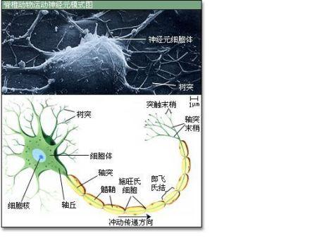 ��D_ck第三弹烐痫 2014-12-08 相关问题 当刺激神经纤维上的某一点时,将
