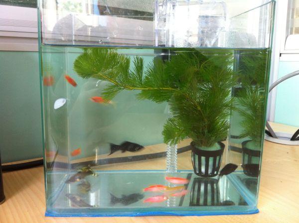 老板办公桌尺寸_很小的鱼缸适合养什么鱼?可不可以做布景_百度知道