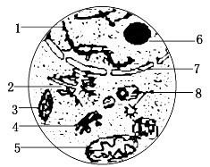 细胞平面图,显示所有细胞器_12日生物26,如图为电子显微镜视野中观察到的某真核细胞的一部分 ...