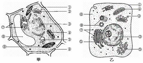 动植物细胞的异同点_植物生物的细胞结构图,植物生物的细胞结构图图片大全