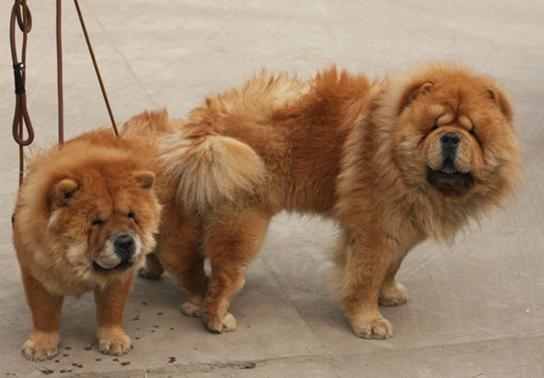 人与动物做爱1715ia{0_狗交配是怎么样的的?图片_百度知道