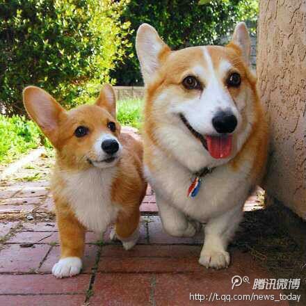 各种狗的图片_求各种宠物狗狗的图片。_百度知道