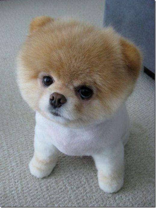 狗狗的图片_我要所有关于这个狗狗的图片和资料。谢谢_百度知道