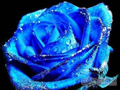 蓝色妖姬是干花吗_蓝色妖姬的图片和花语_百度知道