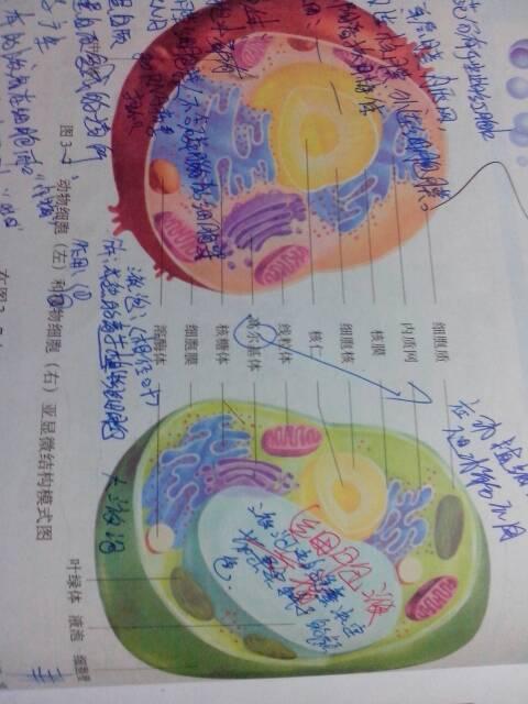 细胞平面图,显示所有细胞器_谁能发个高中生物教科书上动物细胞的结构图来!_百度作业帮