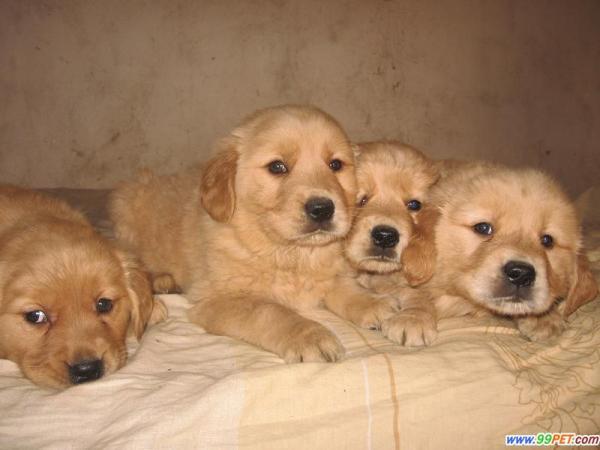 小猎犬多少钱一只_辨别小狗的种类_百度知道