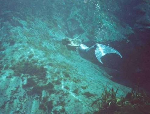 世界上最漂亮的美人鱼图片_世界上真美人鱼内容 世界上真美人鱼图片