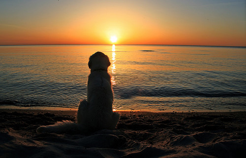 pin golden sunset hd - photo #37