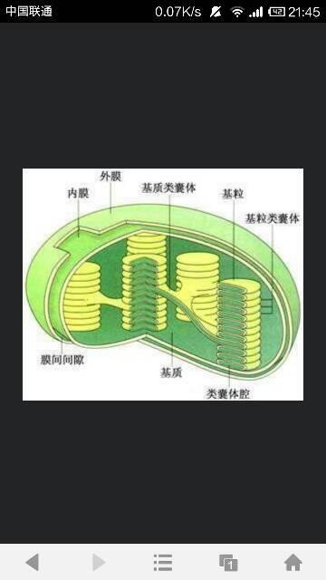 光合作用是绿色植物_叶绿体的结构示意图及其功能_作业帮
