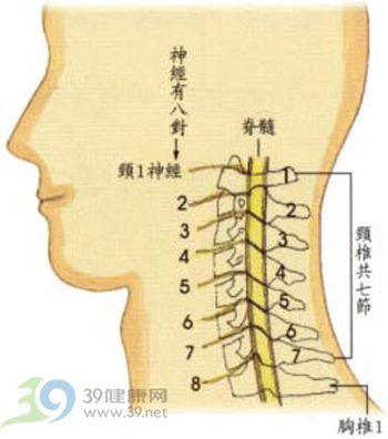 一是人体_颈椎第4、5节是在人体的背部那个位置里吗?_百度知道